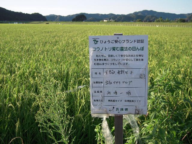 西垣さん田んぼ 20100808